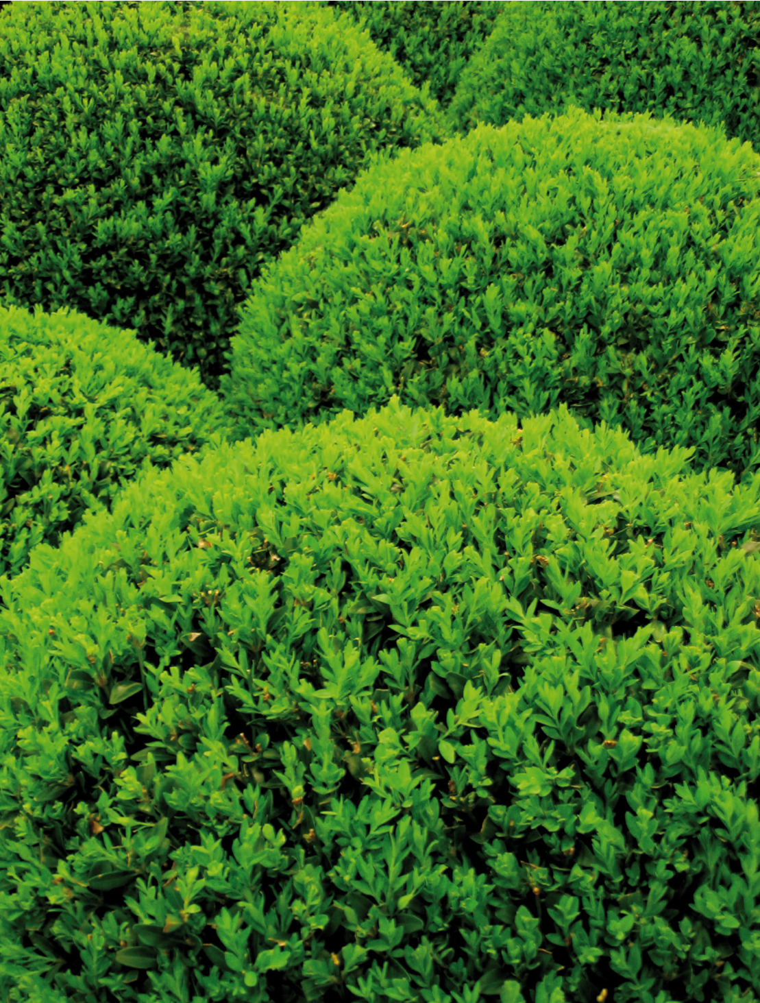 Foundation Plantings Surround Your Home With The Right Plants Central Virginia Home Magazine