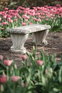 Empty Park Bench in a Tulip Garden