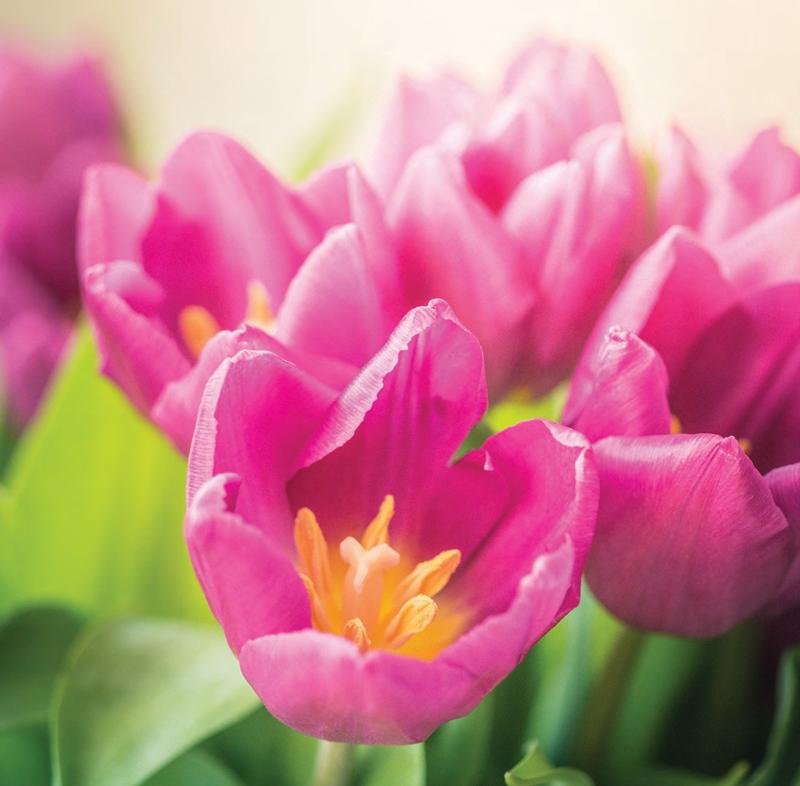Garden_GardenDay_CV-S2018-1