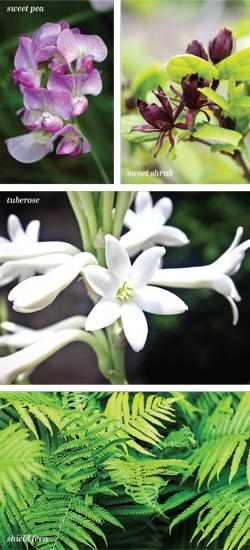 Garden_Passalong_CV-S2018-2