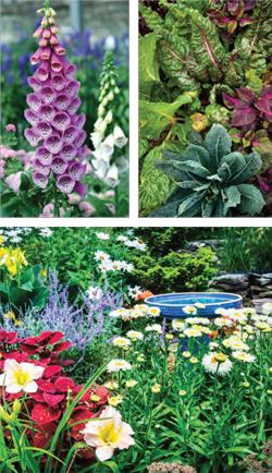 Garden_english_CV-S2018-3
