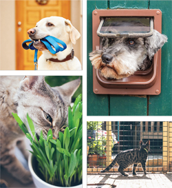 Features_PetFriendly4