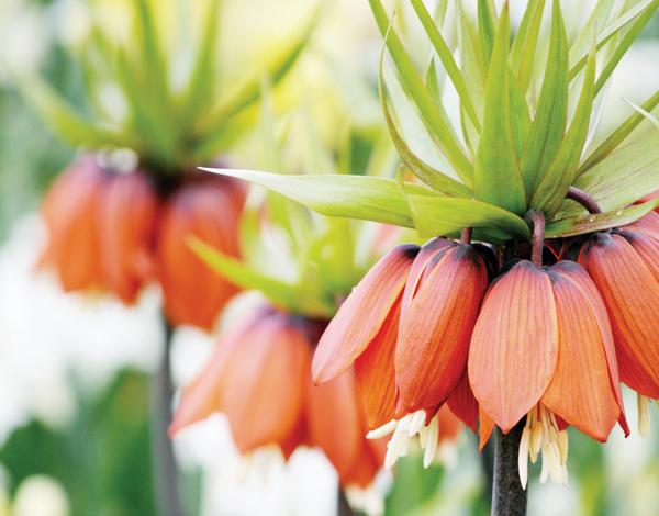 Garden_Blooms1