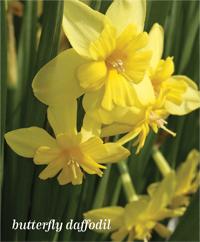 Garden_Blooms3