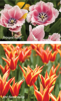 Garden_Blooms5