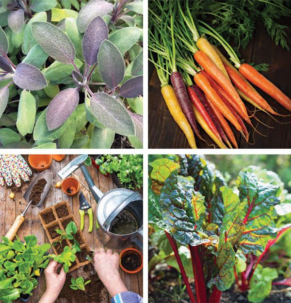 Garden_KitchenGardenPrimer1