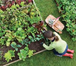 Garden_KitchenGardenPrimer2