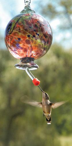 GARDEN_Hummingbirds2