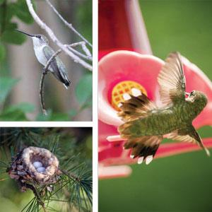 GARDEN_Hummingbirds3