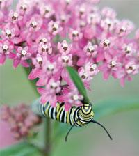 Garden_Butterflies4