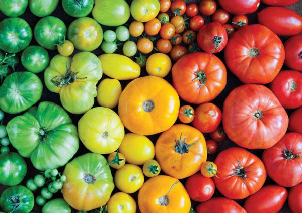 Garden_Tomatoes1