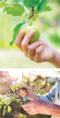 GARDEN_FruitTrees3